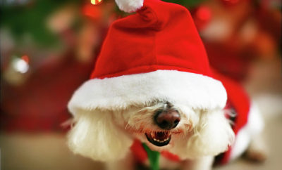operation santa paws the woodlands pets