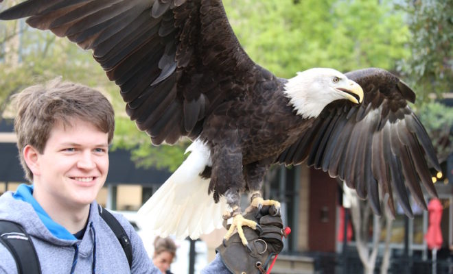 birds of prey inspire film festival market street the woodlands
