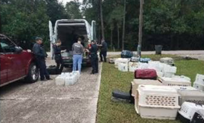 Montgomery County Sheriff's Office Livestock Unit and partners seize 230 cats from home in Spring.