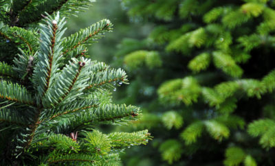 The Woodlands Township offers Christmas tree disposal for residents