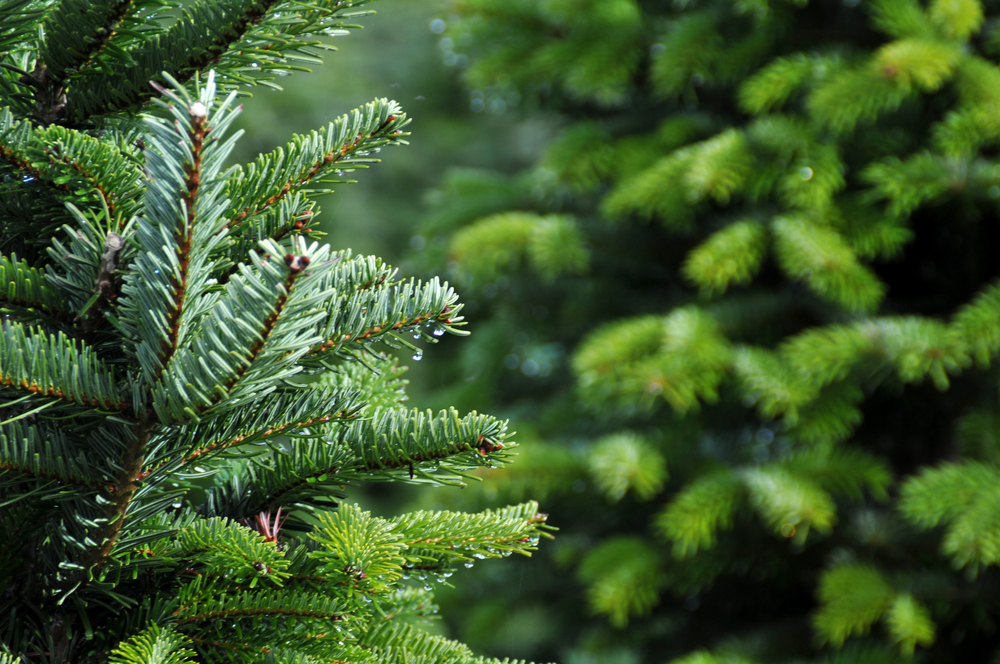 The Woodlands Township Offers Christmas Tree Disposal For