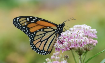 The Woodlands Township introduces Plant for Pollinators program
