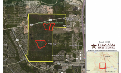 Texas A&M to conduct prescribed burning at Jones State Forest